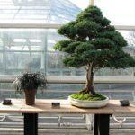 brooklyn-bonsai_03