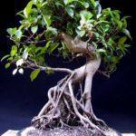 curso_bonsai4