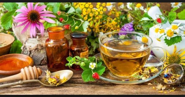 Especialistas dão dicas de como cultivar e usar plantas medicinais ...