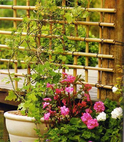 Cerquinha-de-bambú
