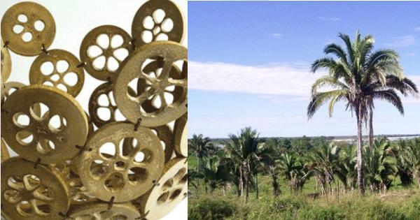 Adesivo De Parede Coruja ~ Conheça o artesanato com babaçu produzido no Tocantins Arte