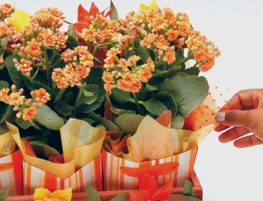 1331125485_flores-laranja_passo10_06-03-12