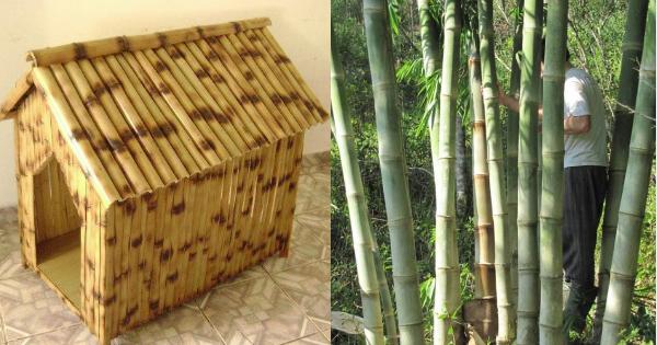 Como fazer artesanato com bambu tratado - Arteblog